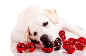 dog-christmas-ornaments-115730468