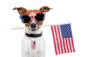 july 4 pet safety